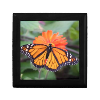 Monarch butterfly on orange flower gift box
