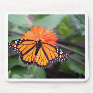 Monarch butterfly on orange flower mouse pad