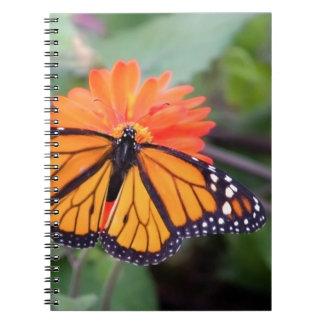 Monarch butterfly on orange flower notebooks