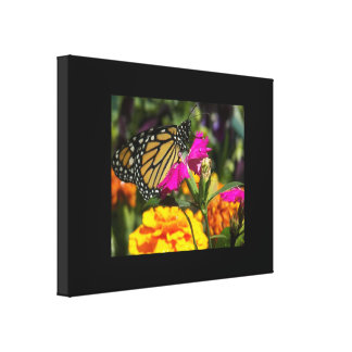 Monarch Butterfly on pink marigold Canvas Print