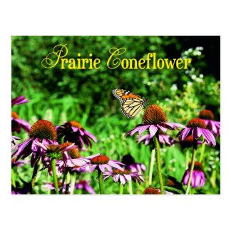 Monarch butterfly on purple prairie coneflower postcard