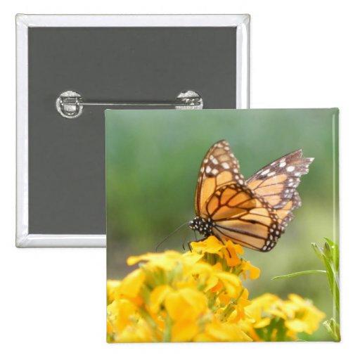 Monarch Butterfly on Siberian Wallflowers Pins