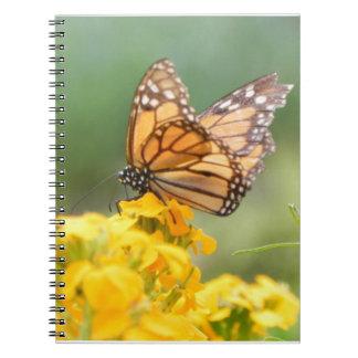Monarch Butterfly on Siberian Wallflowers Spiral Note Book