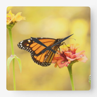 Monarch Butterfly on Zinnia Square Wall Clock