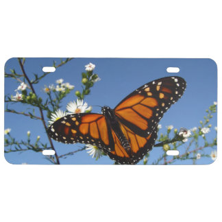 Monarch butterfly White daisies License Plate