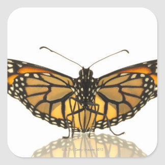 Monarch butterfly with wings spread square sticker