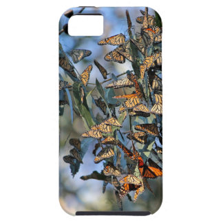 Monarch Cluster iPhone 5 Cases