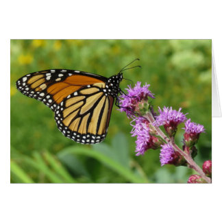 Monarch feeding on Liatris Card