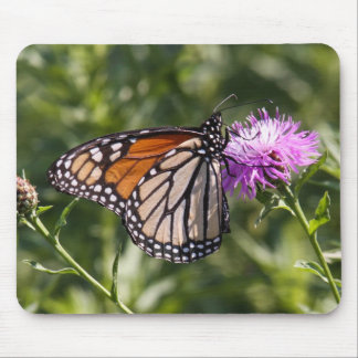 Monarch Mouse Pad