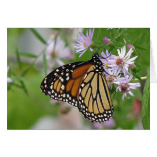 Monarch on Aster Card