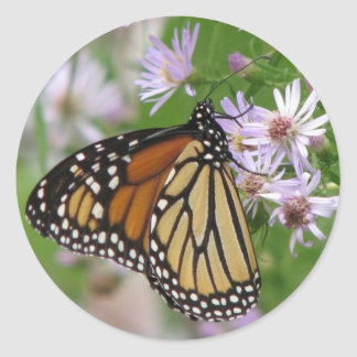 Monarch on Asters Sticker