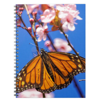 Monarch on Cherry Blossom Notebook