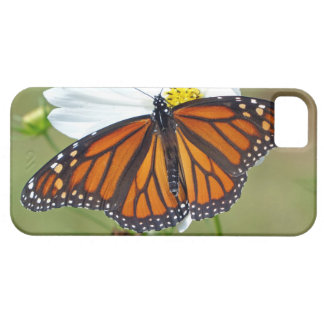Monarch on Cosmos iPhone 5 Cover