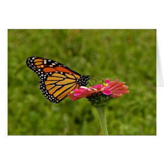 Monarch on Flower Note Card