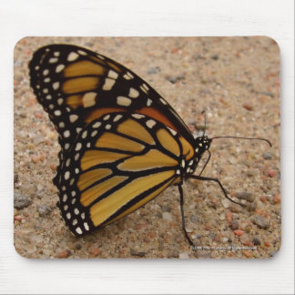 Monarch On The Road Mouse Pad