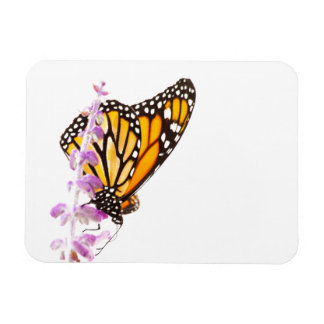 Monarch perched on lavender rectangular photo magnet
