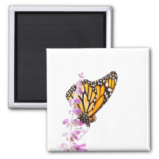 Monarch perched on lavender square magnet