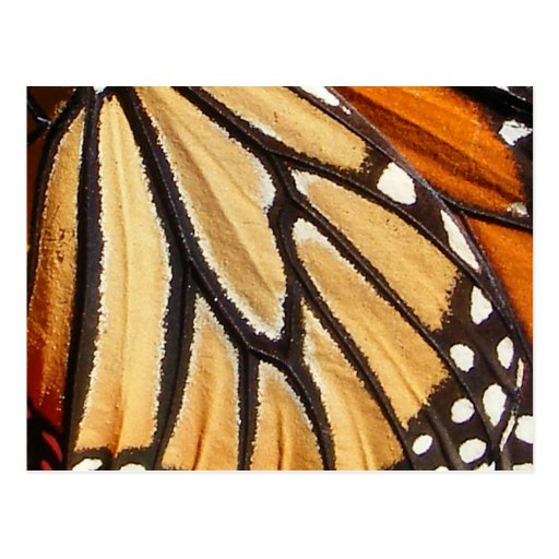 Monarch Wing ~ postcard