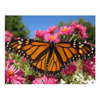 Monarch Wings - Butterfly Postcard