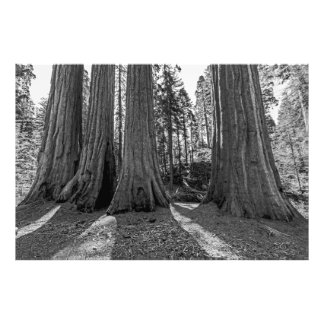 Monarchs of the Forest (Black & White) Photo Print
