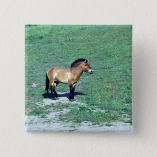 Mongolian (Przewalskii) Wild Horse 2 Inch Square Button