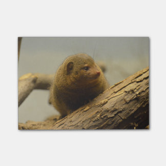 Mongoose a Tree Branch Post-it Notes
