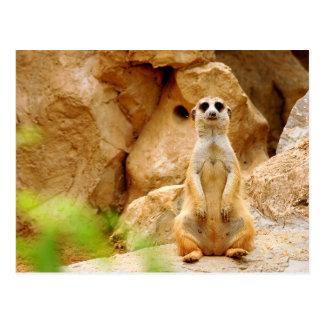 Mongoose Standing Tall Postcard