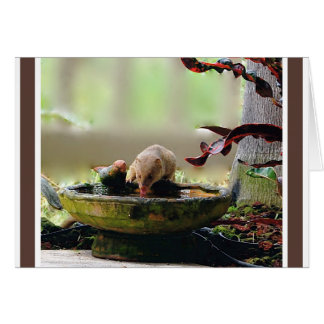 Mongoose Watering Hole Wildlife Card
