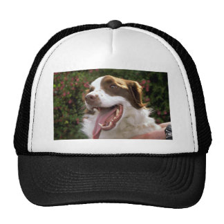 Mongrel dog hat