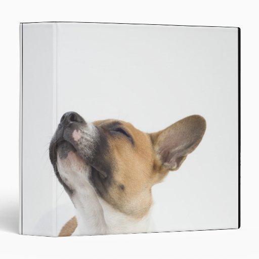 Mongrel puppy vinyl binders