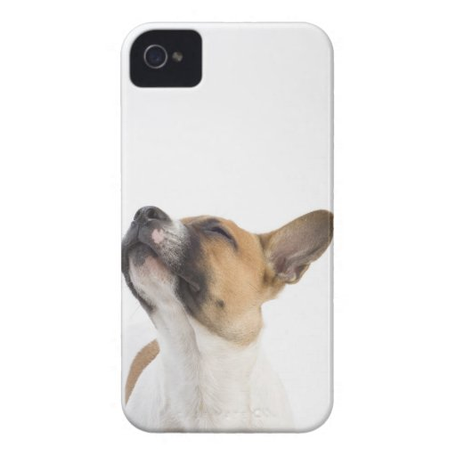 Mongrel puppy iPhone 4 cover