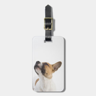 Mongrel puppy tags for bags