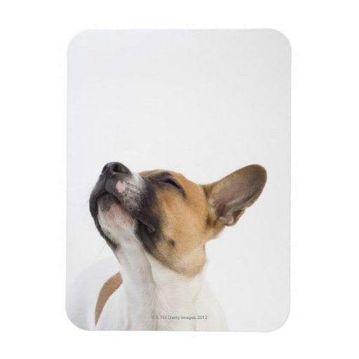 Mongrel puppy rectangle magnet