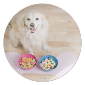 mongrel sitting in front of two bowls with dog dinner plate