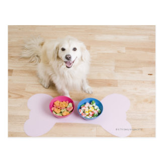 mongrel sitting in front of two bowls with dog postcard