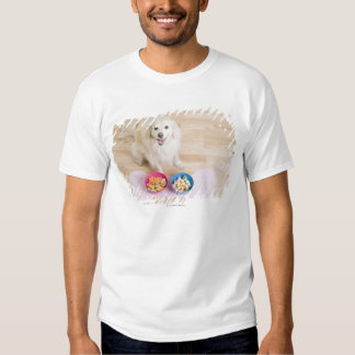 mongrel sitting in front of two bowls with dog t shirts