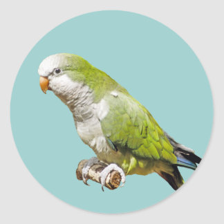 Monk Parakeet Sticker