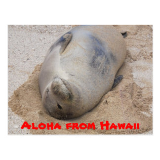 Monk Seal Postcard