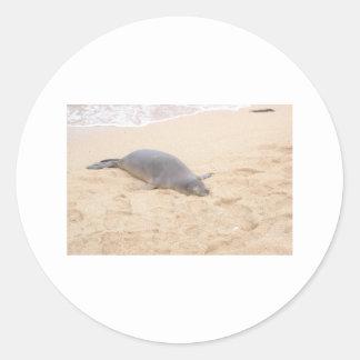 Monk Seal Sleeping Alone on Beach Round Sticker