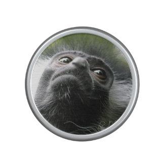 monkey-52 speaker