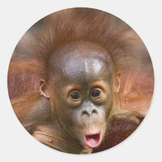 Monkey business 1 classic round sticker