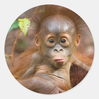 Monkey business 3 round sticker