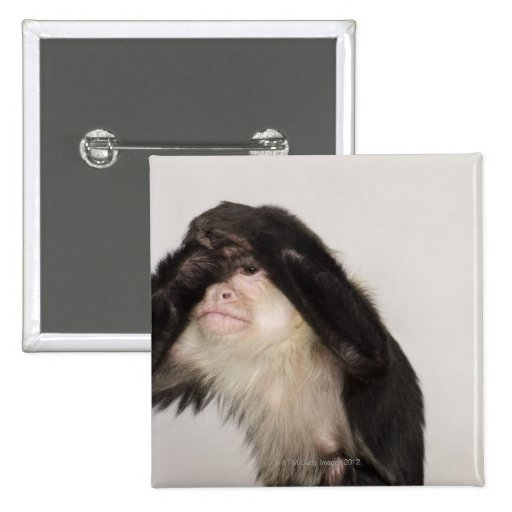 Monkey covering its eyes pinback buttons