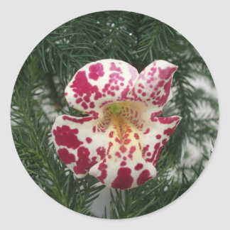 Monkey flower Maroon Spotted/Light Yellow Stickers