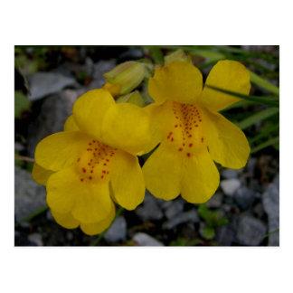 Monkey Flowers, Unalaska Island Postcard