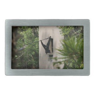 monkey hanging out of concrete house window belt buckles