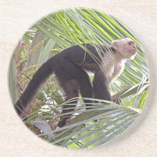 Monkey in Bamboo Jungle Photo Coaster