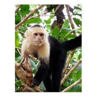 Monkey in Costa Rica Postcards