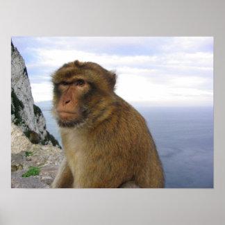 Monkey in Gibralter Poster
