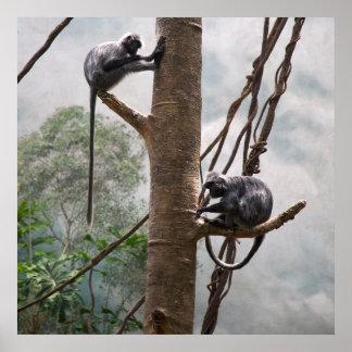 Monkey Jungle Safari African Peace Love Destiny Poster